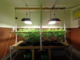In House Plant Inda Gro In House Garden Side By Side Trials Youtube