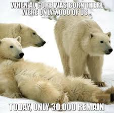 Polar Bear Meme - hilarious polar bear meme destroys democrat s global warming claims