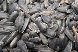black oil sunflower seeds with best picture collections