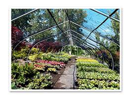 garden supply rochester ny nursery