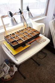 get 20 starting seeds indoors ideas on pinterest without signing