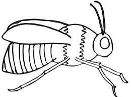 bumble bee coloring pages learning ideas free bumblebee sheets