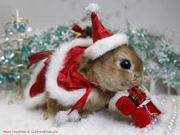 christmas bunny wallpapers for free download