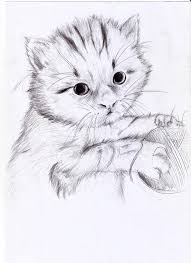imagenes a lapiz de gatos cat gato lapiz by gerardcasanovas on deviantart