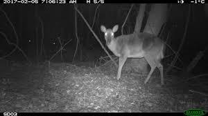 fake deer emammal animals inspire u201cpoems for your pocket u201d