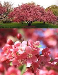 chambre d hote ile rousse 30 luxe plante interieure fleurie pour chambre d hote ile rousse