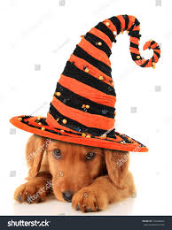 cute puppy wearing halloween witch hat stock photo 154498484