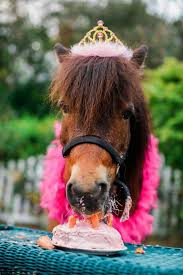 Horse Birthday Meme - for a birthday birthday pinterest birthdays happy birthday