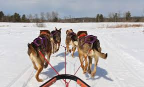 1 minute dog sled heywood kennel in augusta act out with aislinn