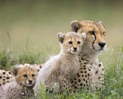 59 stocks at wild animals pictures group