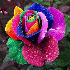 beautiful plants 20x beautiful rose flower seed colorful seeds for lover petal plants