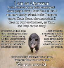 opossum album on imgur