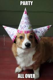 Birthday Animal Meme - joke4fun memes happy birthday you party animal
