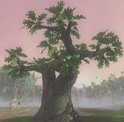 oak tree viva piñata wiki fandom powered by wikia