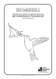 hummingbird coloring page cheap hummingbird coloring pages with