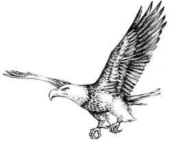 bald eagle drawings clip art library