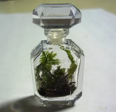 mossy musings miniature terrarium in a vintage perfume bottle 2