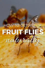 How To Get Rid Of Flies In The Backyard by How To Get Rid Of Fruit Flies Naturally Small Footprint Family