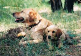 Posts by Guest Author   Puppy Education   Page   Almost all oral problems are caused by bacteria build up in the mouth  it leads not only to bad breath but also periodontal disease  loose teeth