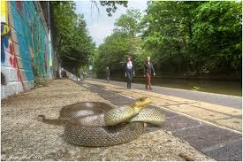 aesculapian snakes london