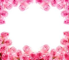 pink and roses pink and white flowers images free stock photos