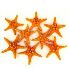 Star Vase 5