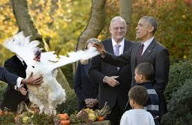 obama makes thanksgiving turkey pardon as daughters