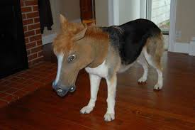 Horse Mask Meme - 10 awesomest photos of pets wearing a creepy horse mask heavy com