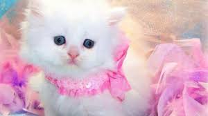 most beautiful kitten ever lovely cat video dailymotion