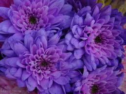 30 best purple images on pinterest purple stuff all things