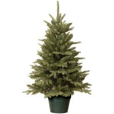 potted christmas tree live potted christmas tree alberta spruce hostess gift