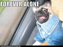Sad Pug Meme - it s because of the jean jacket isn t it animal capshunz funny