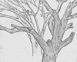 10 best images of drawings of trees with leaves tree without