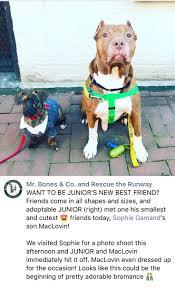 1106 best animal friends images on pinterest animal rescue pet