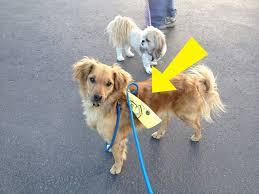 dog ribbon what does a yellow ribbon on dog