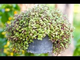 container gardening ideas youtube