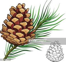 pine cone vector art getty images