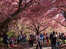 brooklyn botanic garden visitors guide