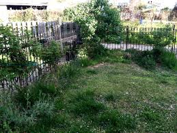 three steps to prepare your overgrown yard for landscaping