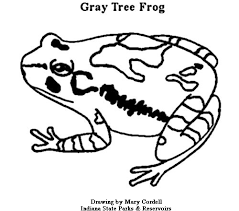 tree frog coloring free coloring african animals