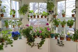beautiful house plants seven ways to beautiful houseplants