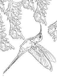 bird coloring pages to print hummingbird coloring pages download and print hummingbird