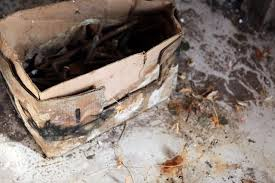 How Do You Get Rid Of Mold In A Basement by How To Get Rid Of Black Mold On Basement Walls Hunker