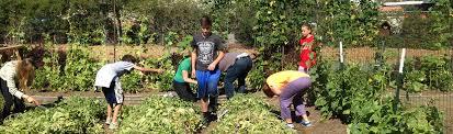 Speech Garden Summer Camp - summer impact camp jfcs