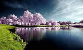 imagenes impresionantes de paisajes naturales imágenes de paisajes naturales imagenes de rosas azules