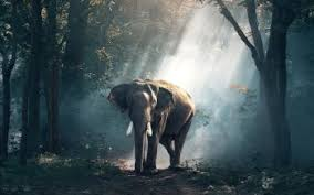 cool elephant wallpaper 461 elephant hd wallpapers background images wallpaper abyss