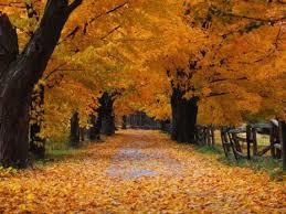 imagenes de otoño para fondo de escritorio espectaculares paisajes de otoño para el fondo de pantalla