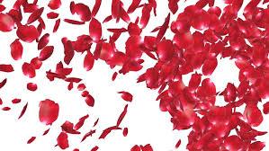 wedding backdrop hd flying flower petals lovely heart placeholder backdrop