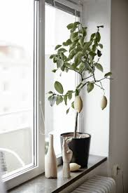 407 best window decor scandinavian images on pinterest windows
