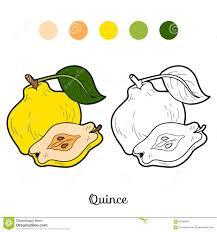 livre de coloriage fruits et légumes poire illustration de